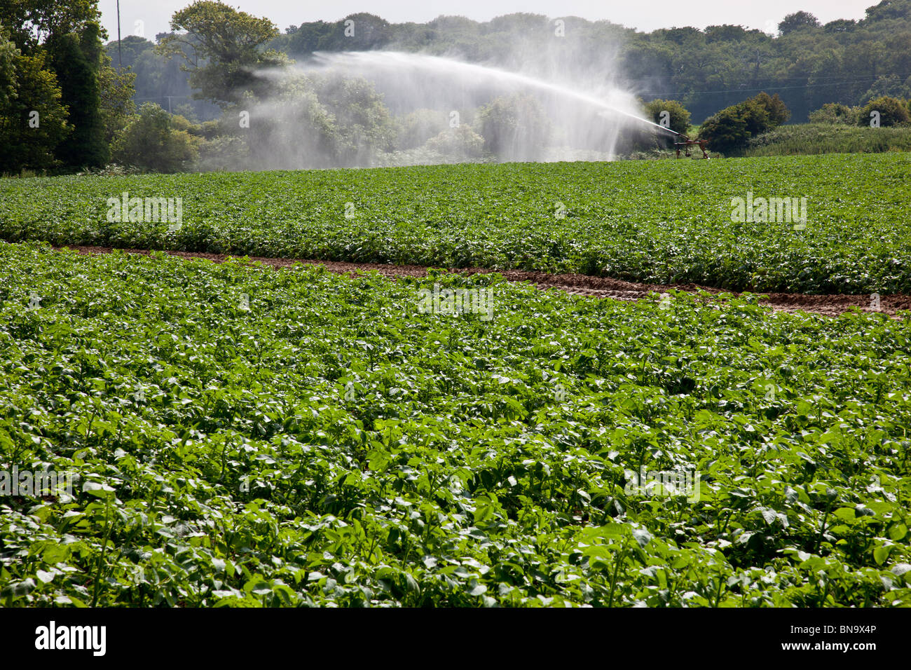 Potato field near Cromer, Norfolk, being irrigated (as seen from the Weavers Way public right of way.) - Stock Image