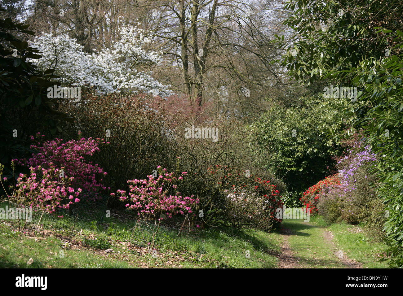 Cholmondeley Castle Gardens. Spring view of the Tower Hill woodland ...