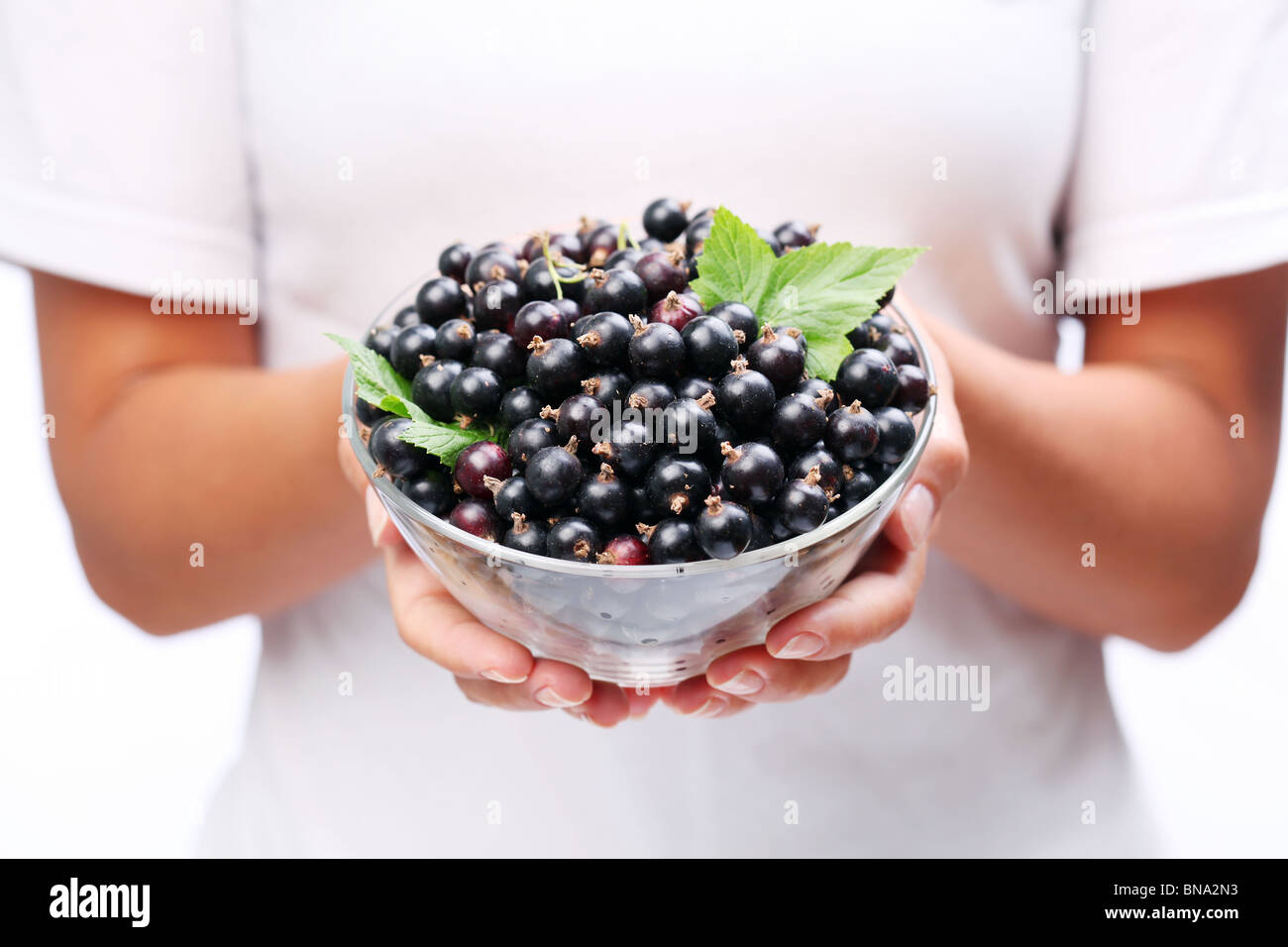 Crockery with black currant in woman hands. - Stock Image