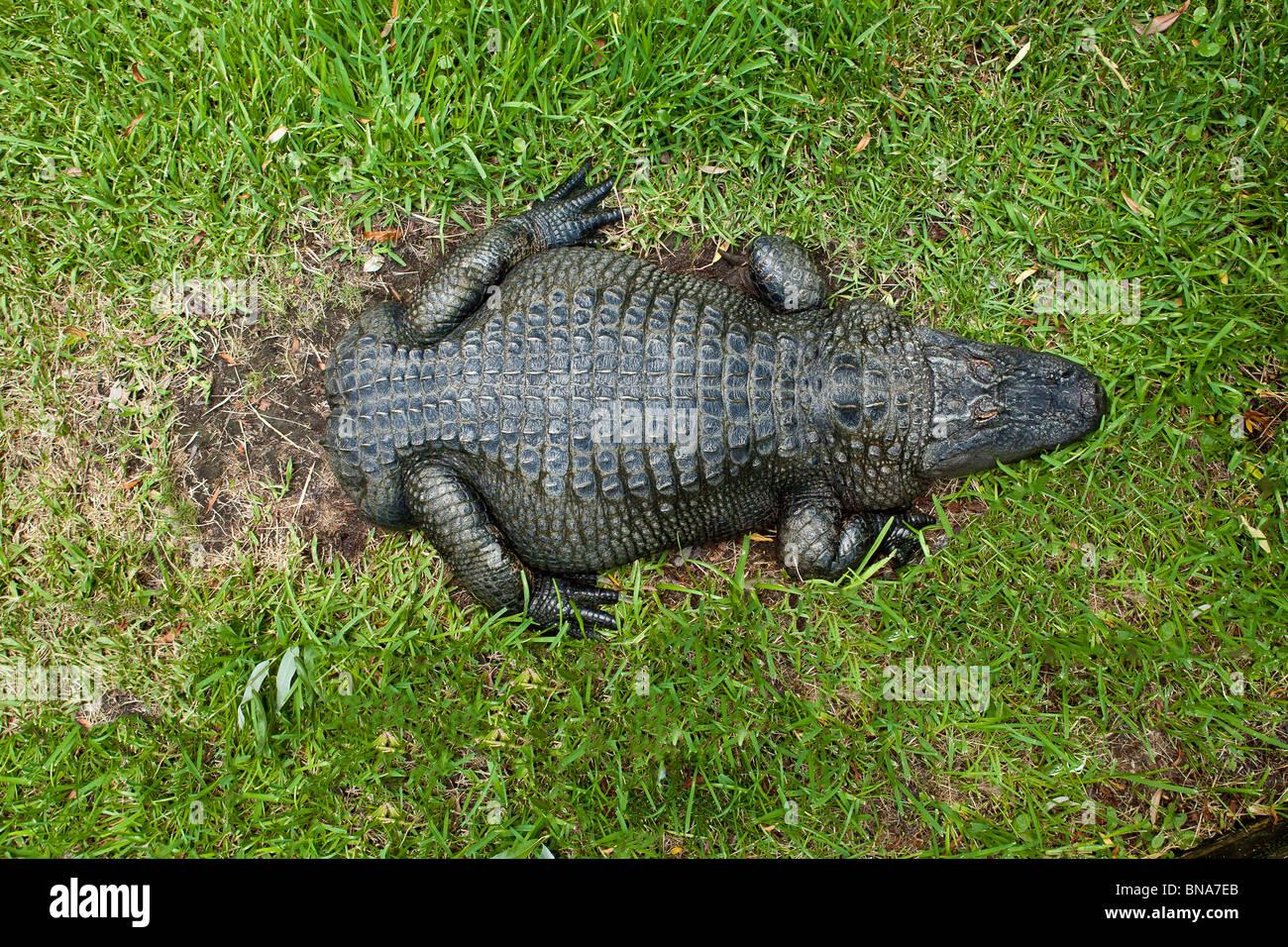 Alligator Zoo Myrtle Beach Sc