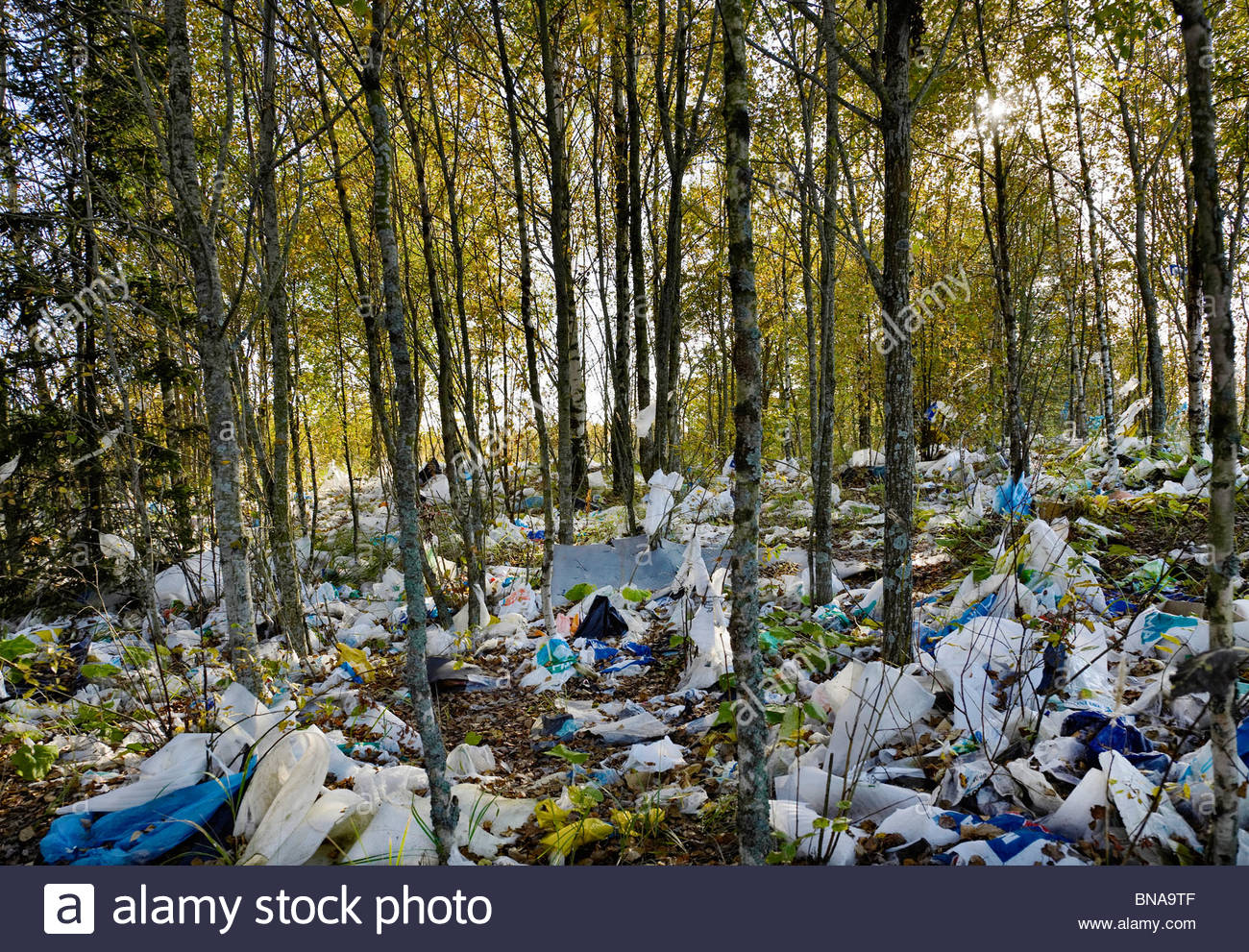 plastic bags, blown, in the forest, waste, environment, - Stock Image