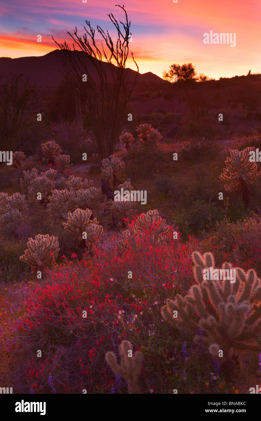 Wildflowers near Bartlett Lake, Tonto National Forest, near Phoenix, Arizona. - Stock Image