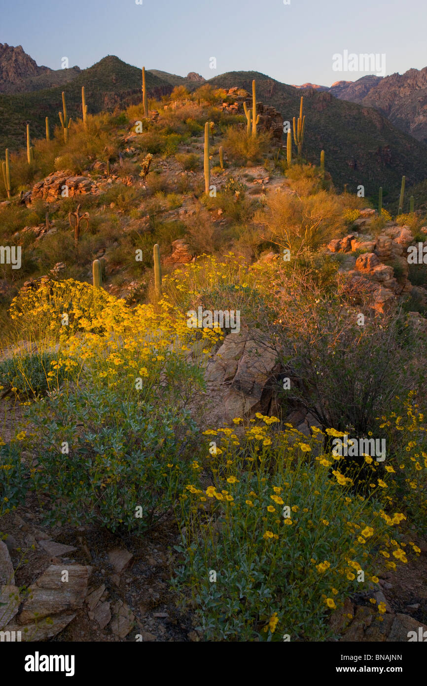 Sabino Canyon Recreation Area, Tucson, Arizona. - Stock Image