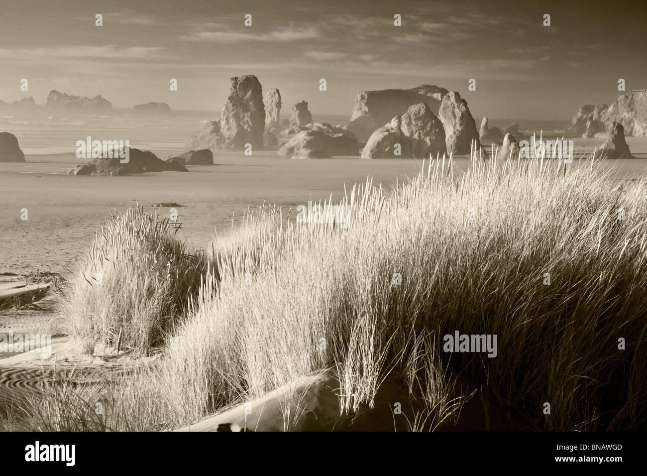 Dune grass and sea stacks at Bandon Beach . Oregon - Stock Image