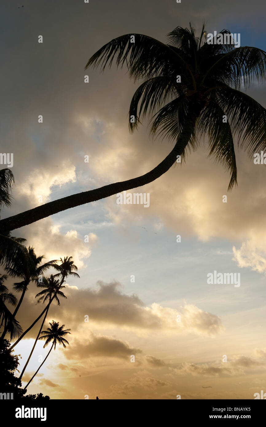Tropical scene with palm trees. - Stock Image