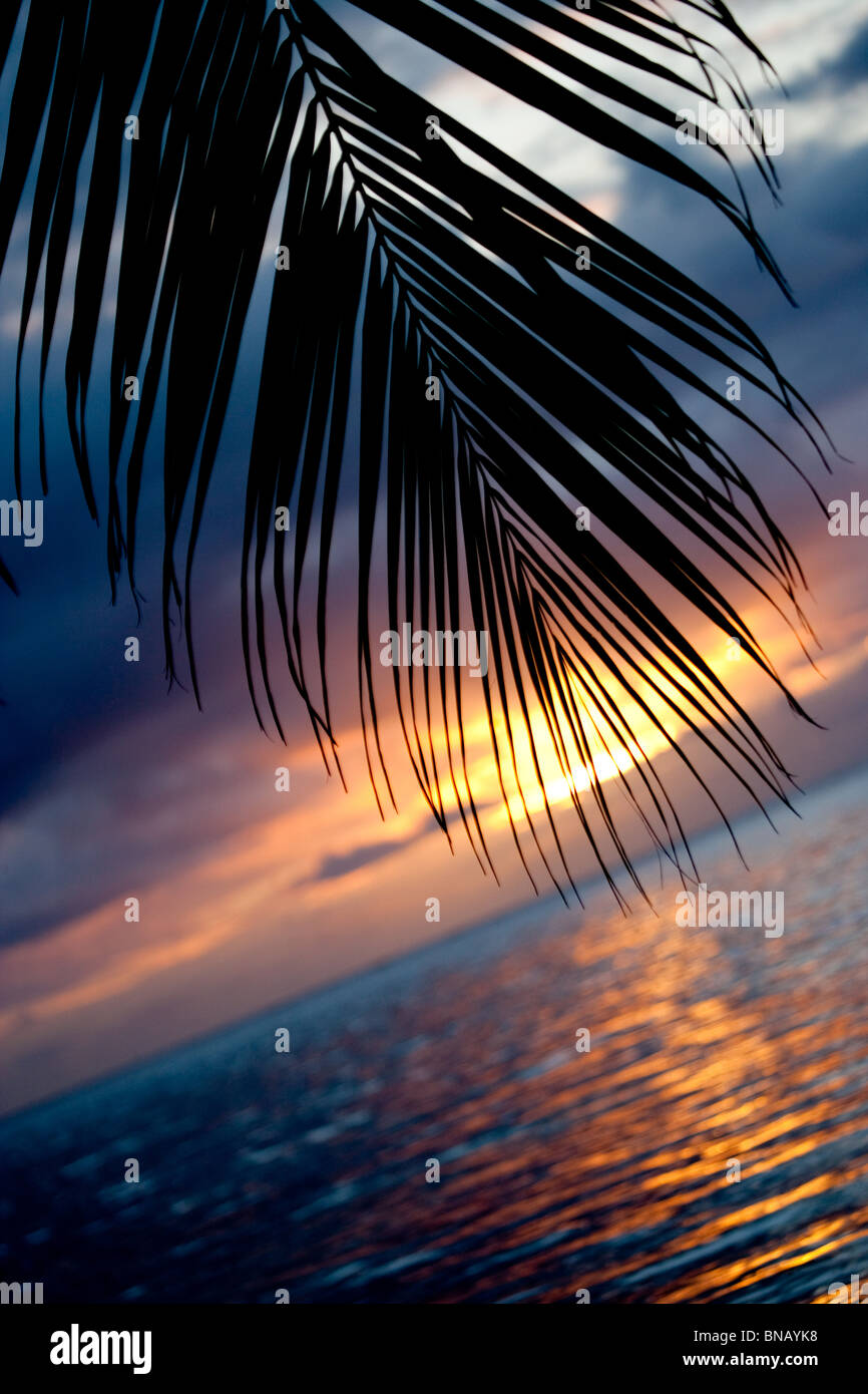 Palm frond at sunset. - Stock Image