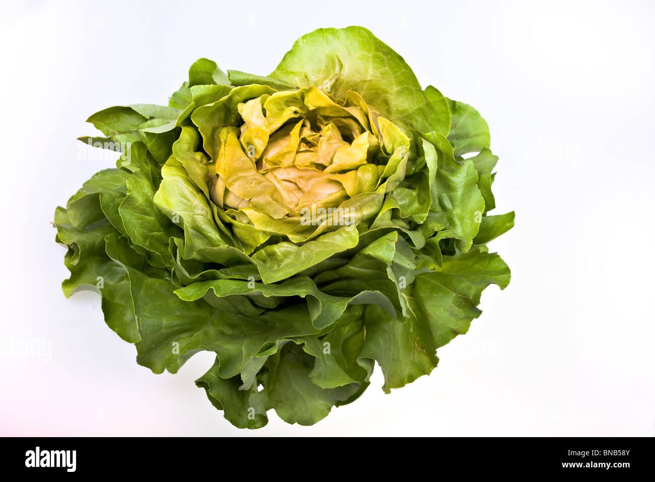 Fresh salad lettuce isolated on white - Stock Image
