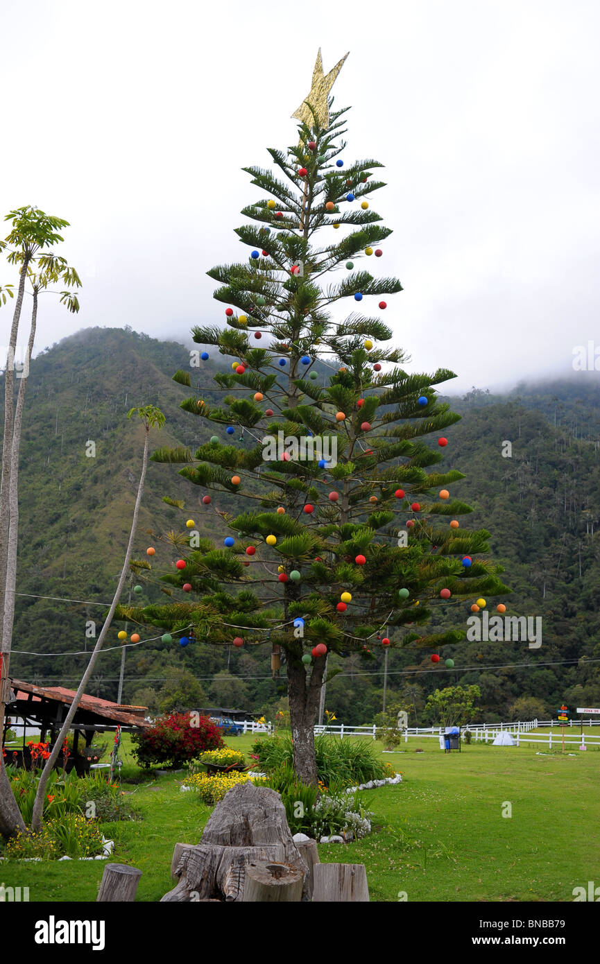 Christmas In Colombia South America.Christmas Tree In The Countryside Surrounded By Green