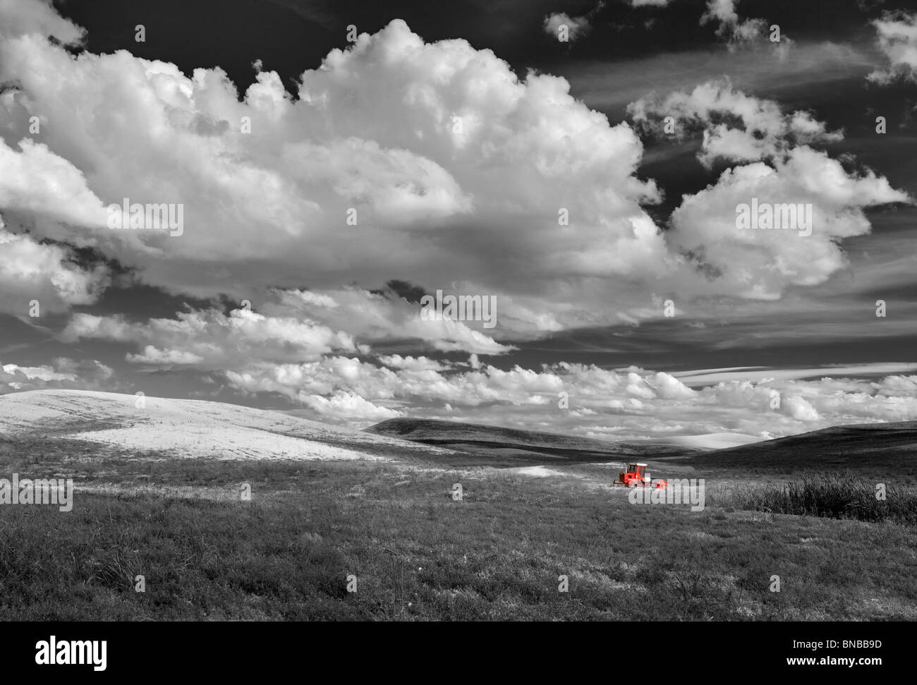 Lentil bean field and tractor. The Palouse, Washington - Stock Image