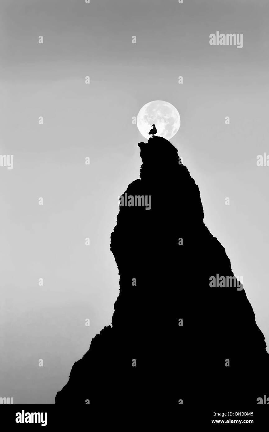 Full moon setting over rock at Bandon Beach with seagull. Bandon, Oregon Stock Photo