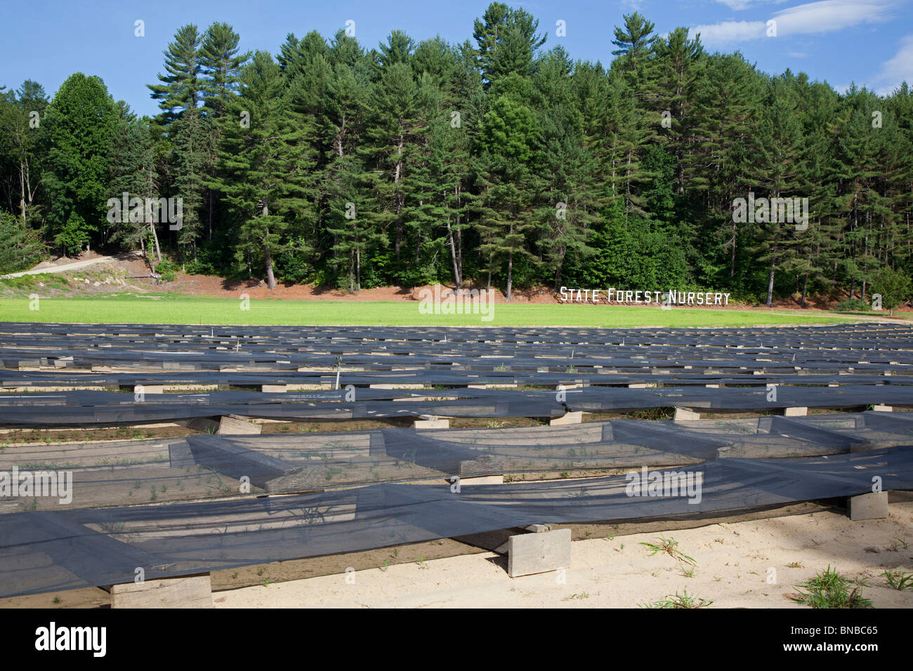 The New Hampshire State Forest Nursery Stock Photo