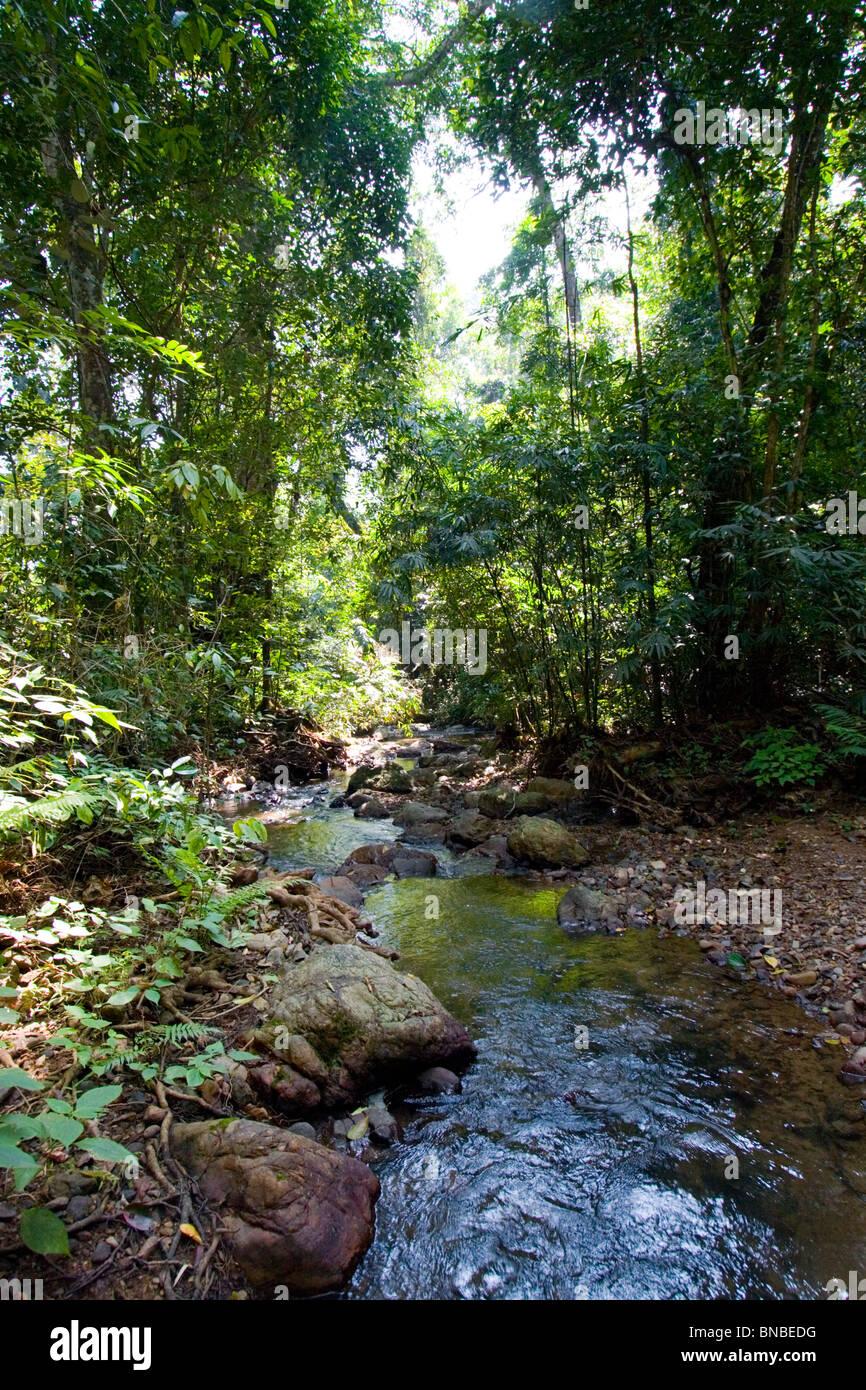 Rainforest stream, Kaeng Krachan National Park, Thailand Stock Photo