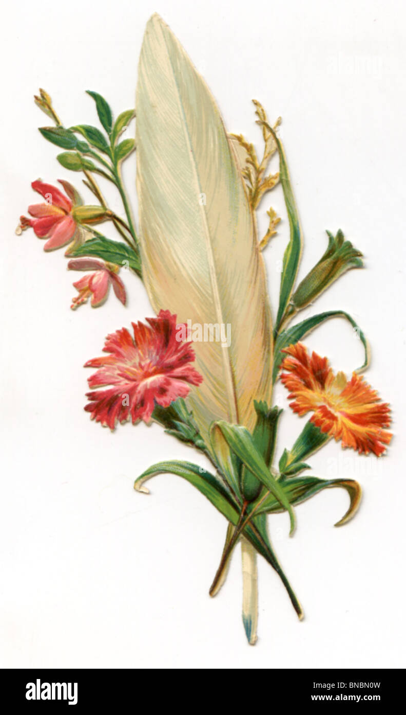 Carnation with a Feather - Stock Image