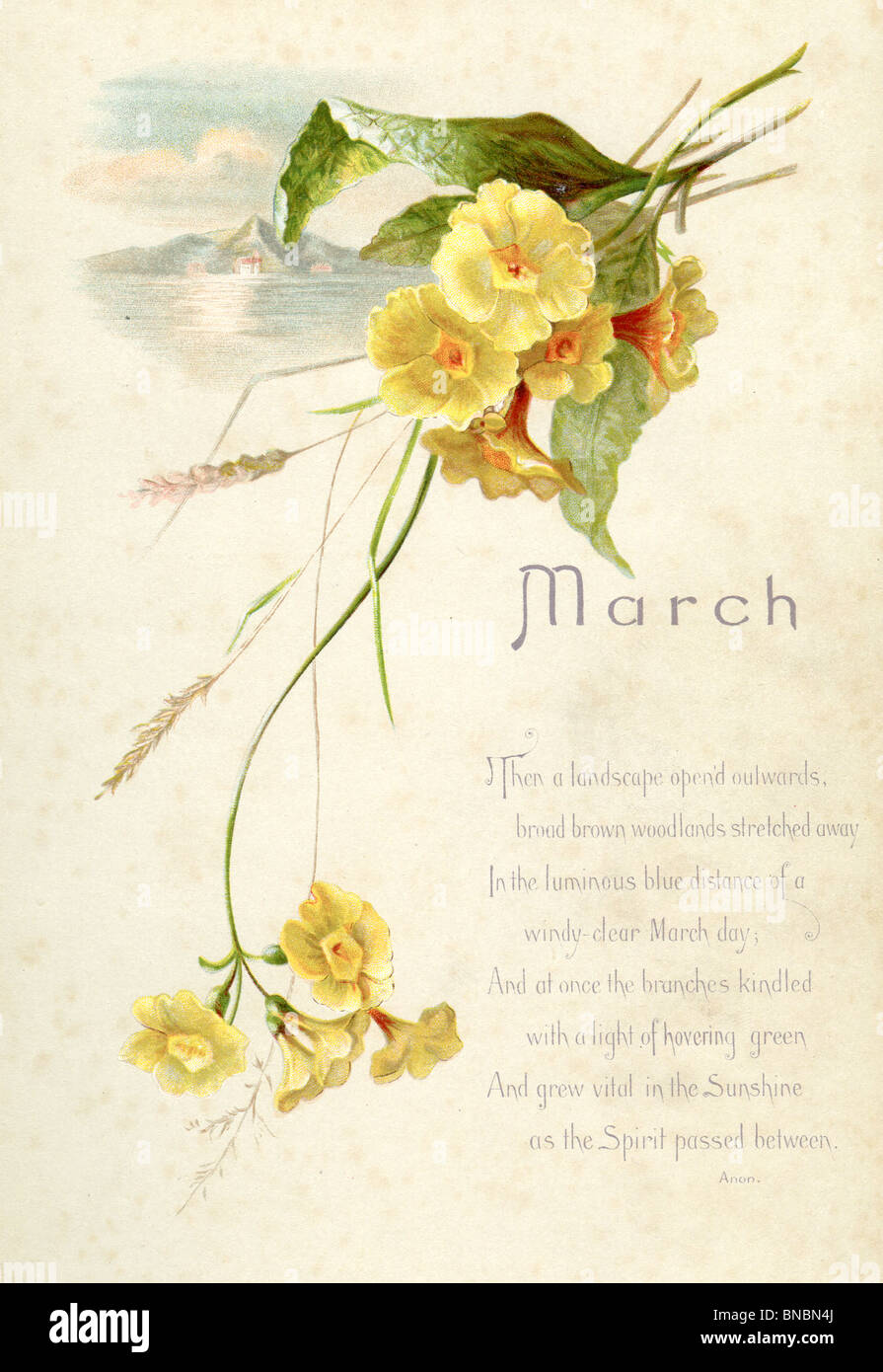 March Poem with Polyanthus - Stock Image