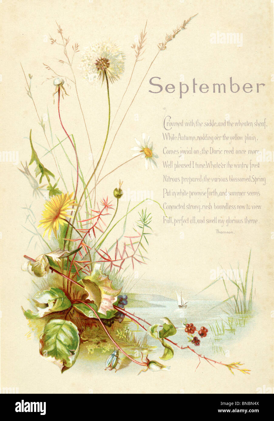 Daisies painting stock photos daisies painting stock images alamy september poem with dandelion and daisies stock image izmirmasajfo