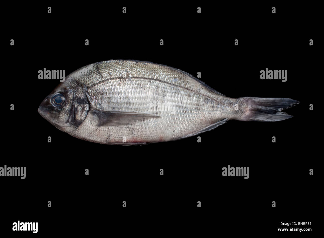 Sea fish (undefined) Stock Photo
