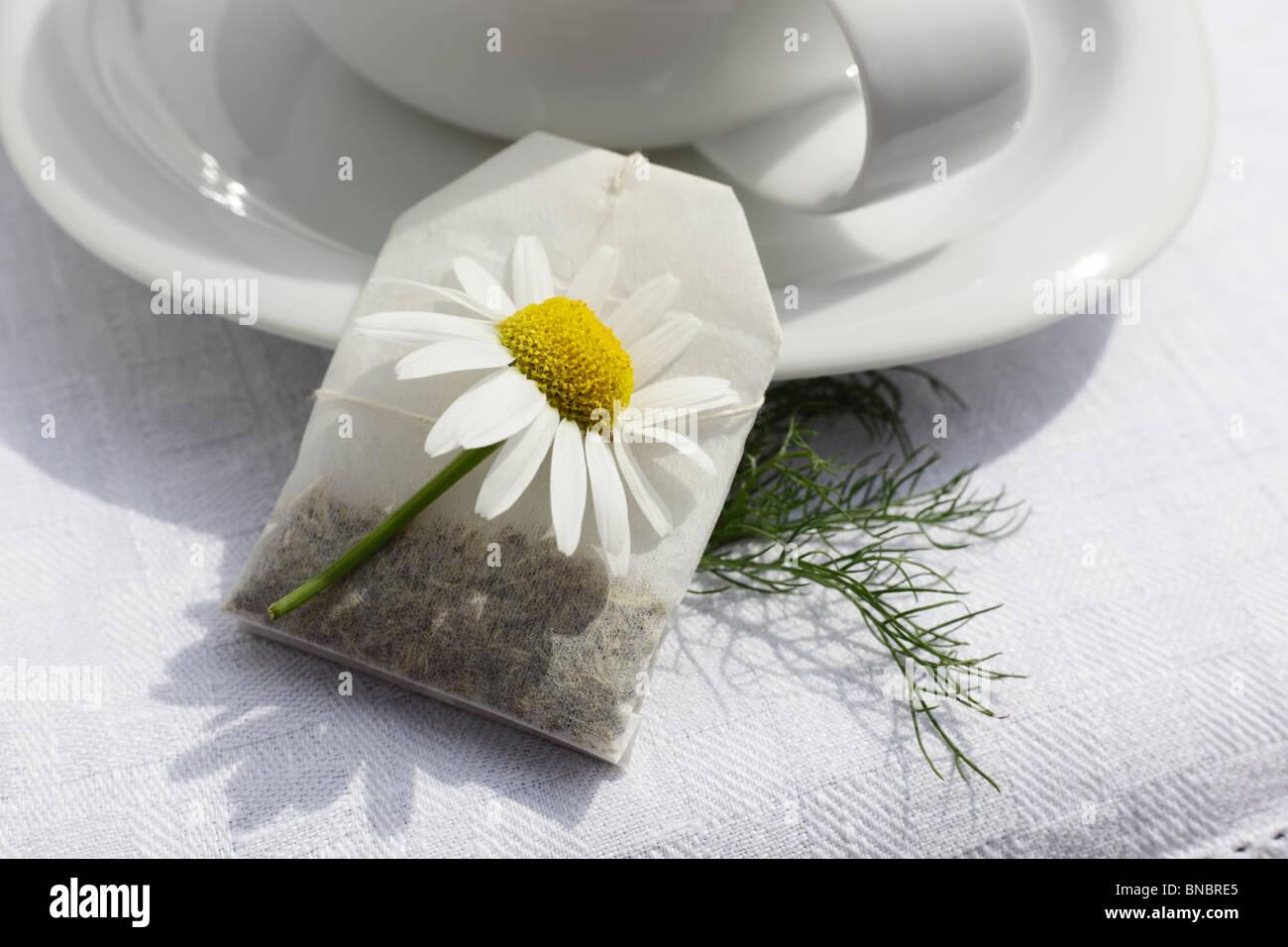 Teetasse mit Aufgussbeutel Kamillentee, Matricaria chamomilla Stock Photo