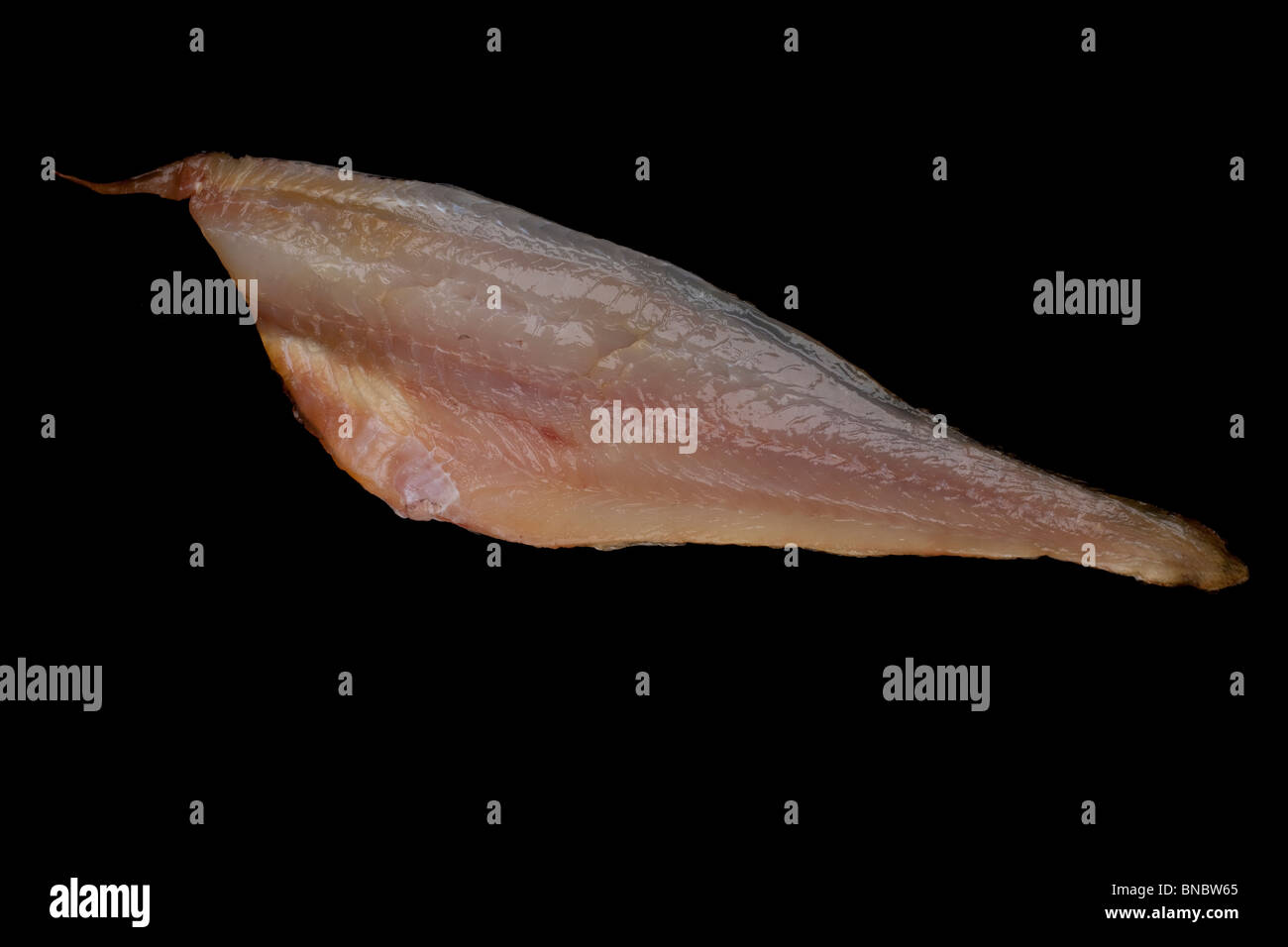 Haddock or offshore hake fillet distributed on both sides of the North Atlantic. - Stock Image