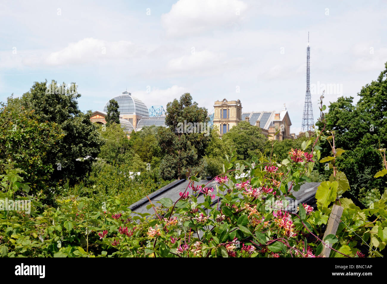 Alexandra Palace Allotments an urban allotment site with views of the Palace in North London, Honeysuckle in foreground - Stock Image