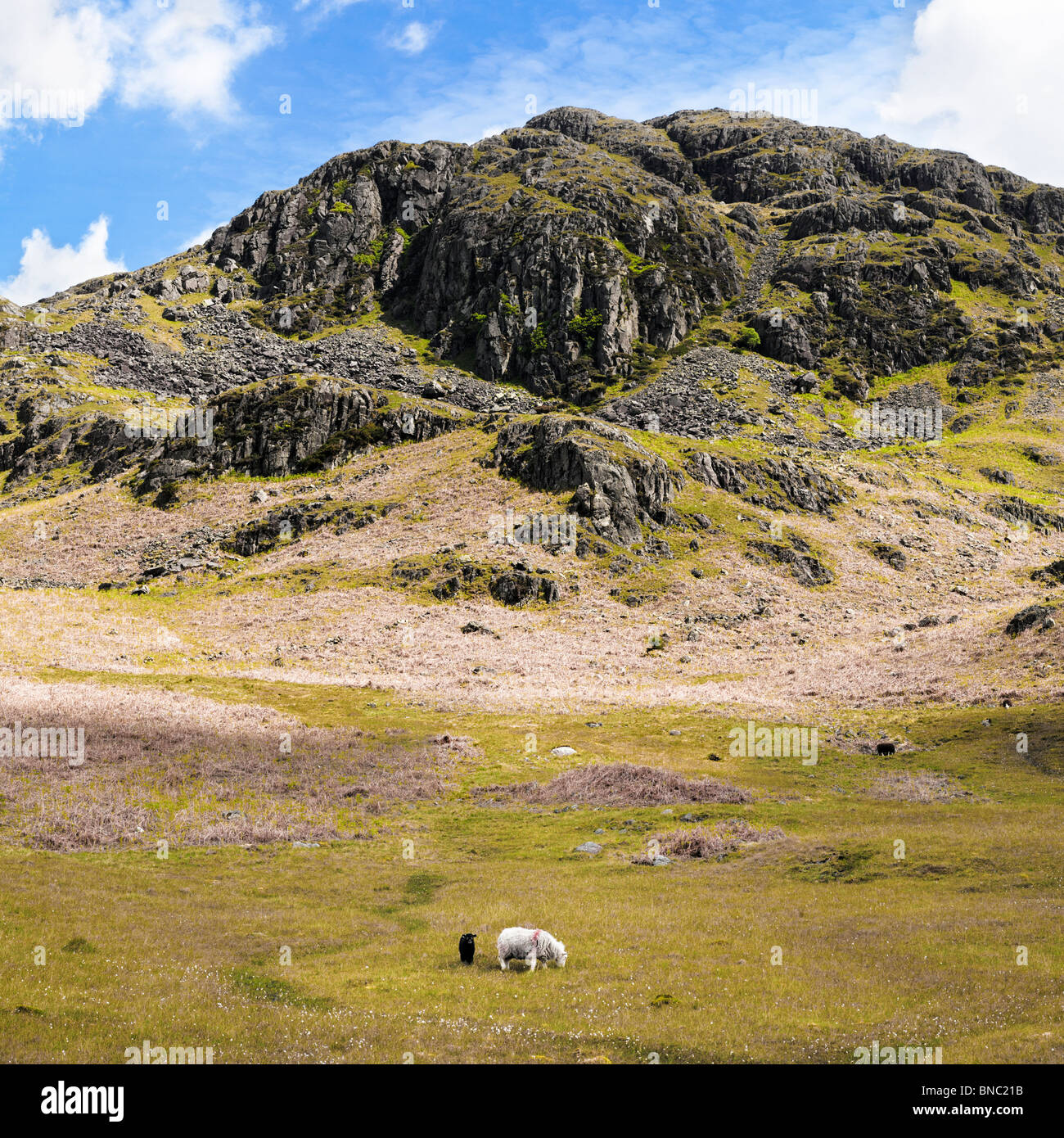 Herdwick Ewe and Lamb underneath a rocky crag in The Lake District Cumbria England UK - Stock Image