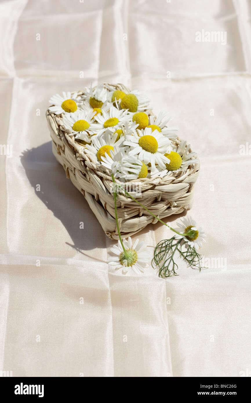 Kamillenblueten, Matricaria chamomilla Stock Photo
