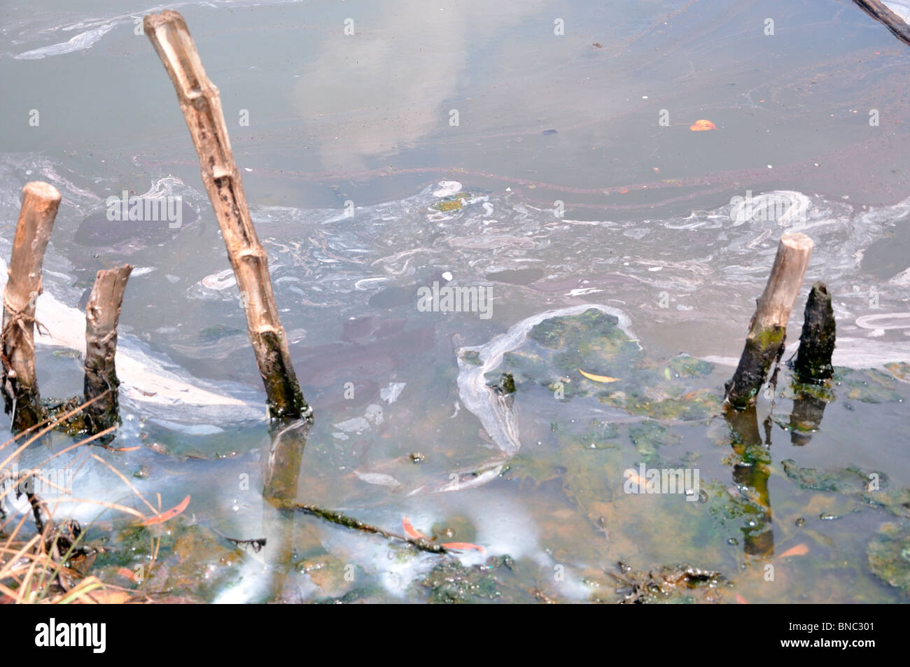 Discharged Waste - Stock Image