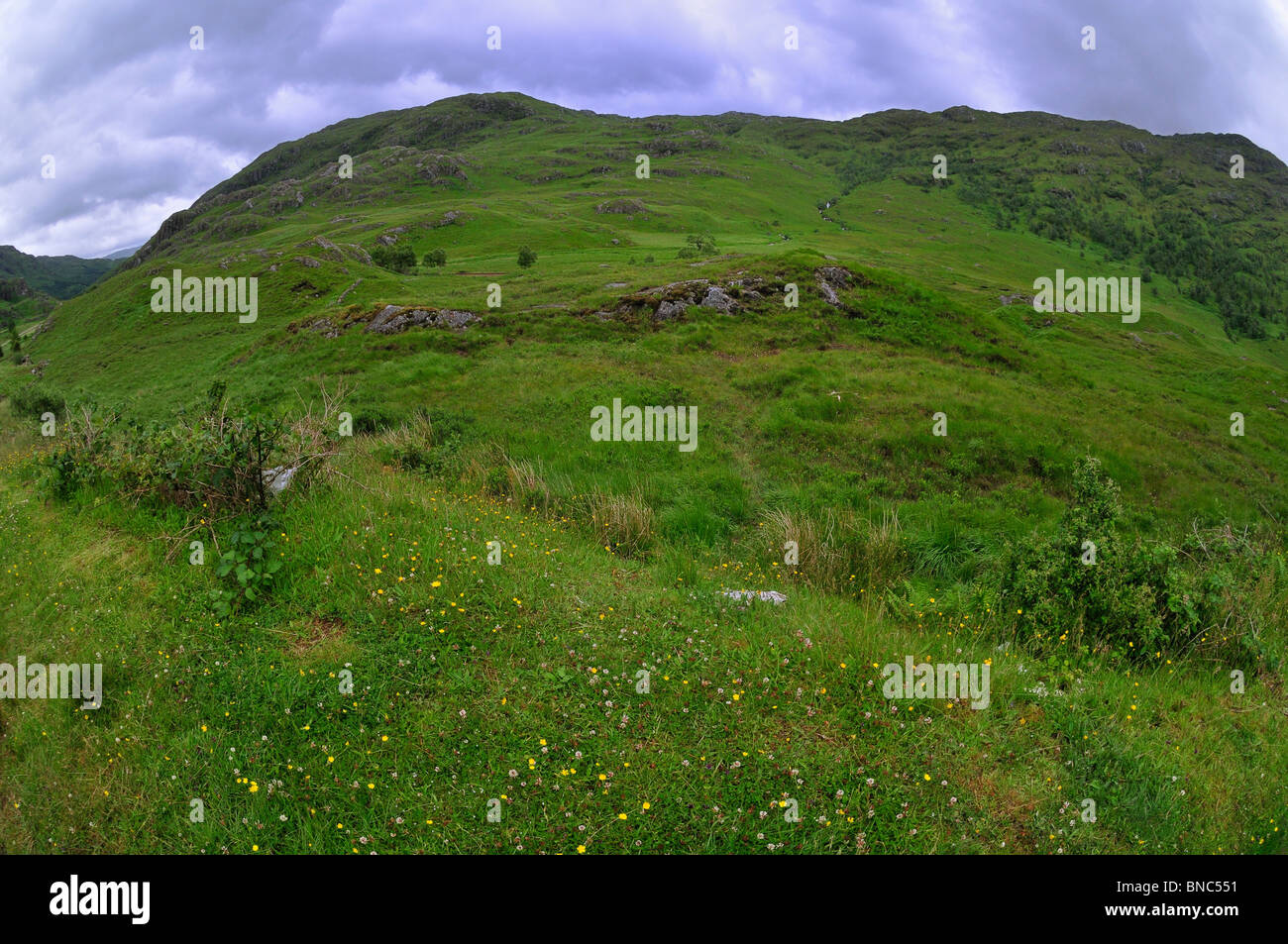 A green highland mountain near Glenfinnan seems to glow on an overcast day - Stock Image