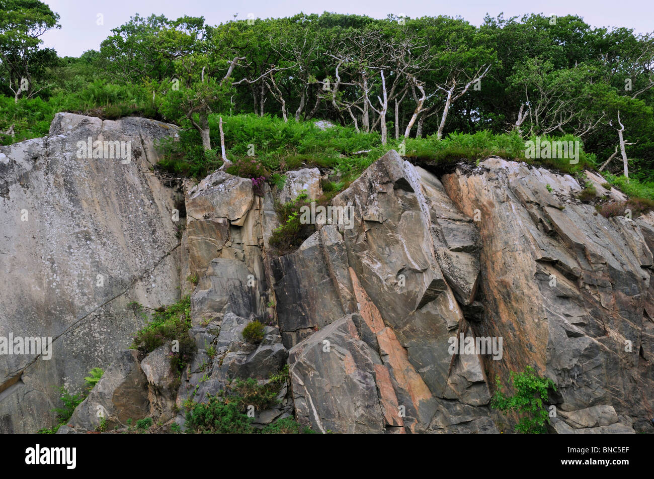 Trees grow atop a sheer cliff studded with huge rocks west of Glenfinnan - Stock Image