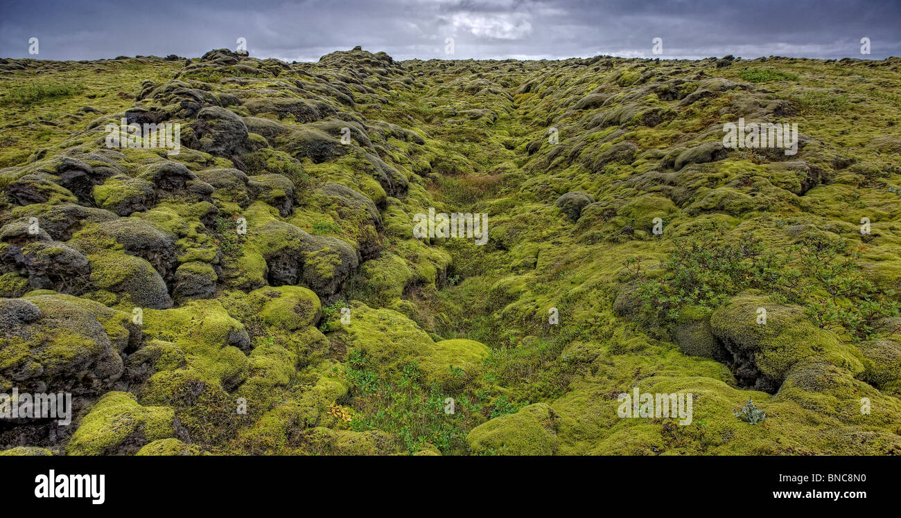 Moss covered lava on the South Coast of Iceland - Stock Image