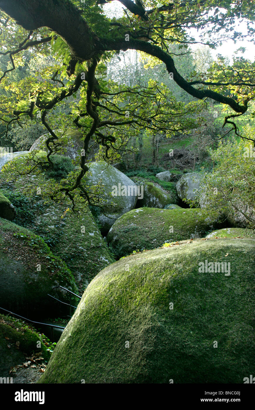 Forest of Huelgoat - Stock Image