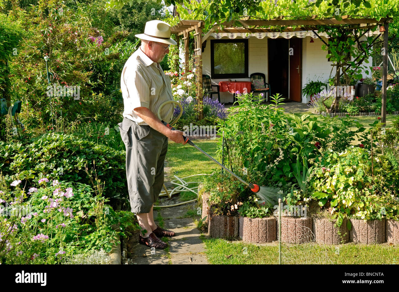 Man 50s 60s watering allotment garden, Germany - Stock Image