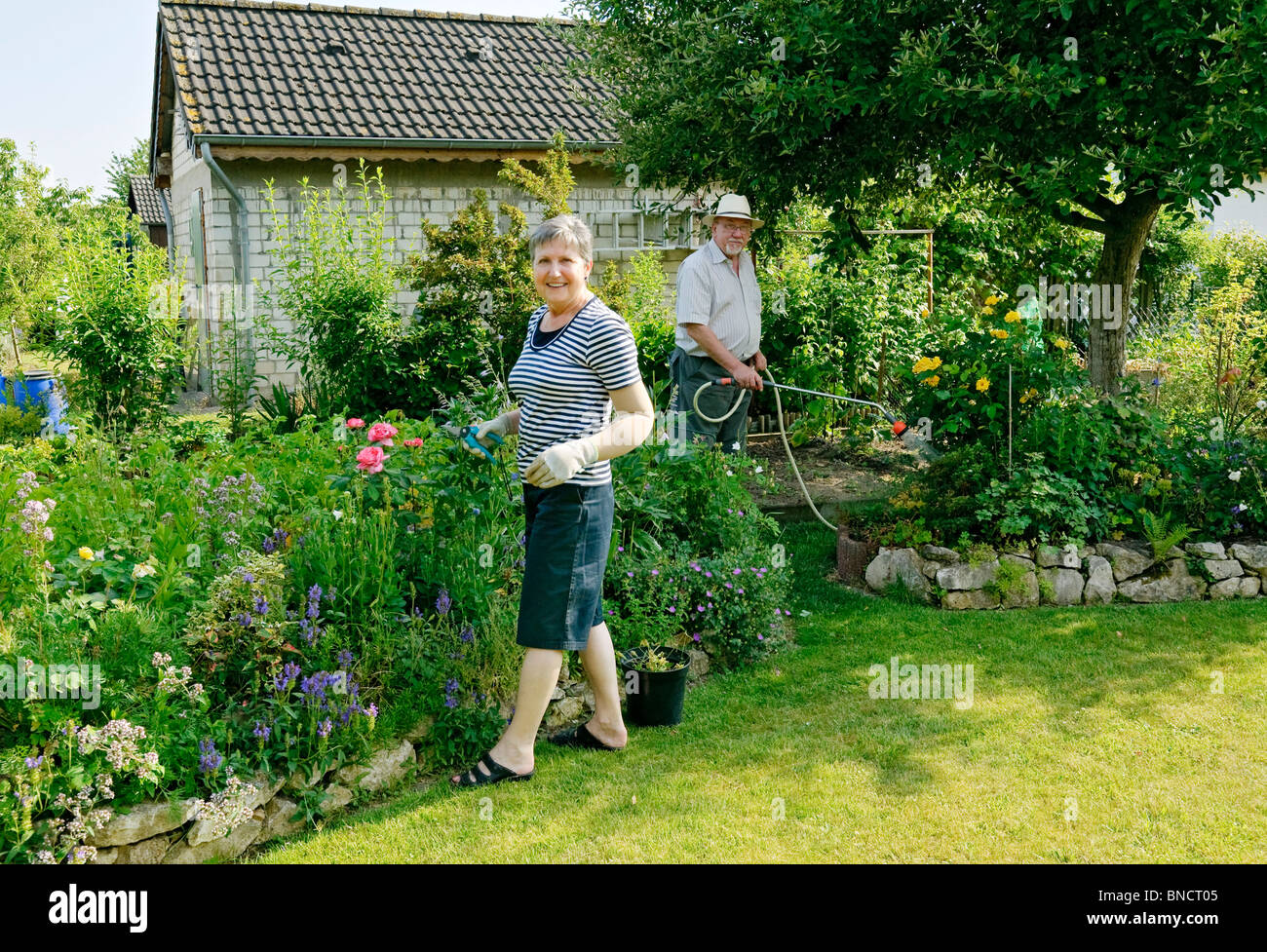 Woman pruning plants, man watering allotment garden, Germany. - Stock Image