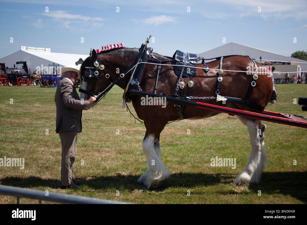 Man with shire horse at Cheshire Show, Knutsford, England. - Stock Image