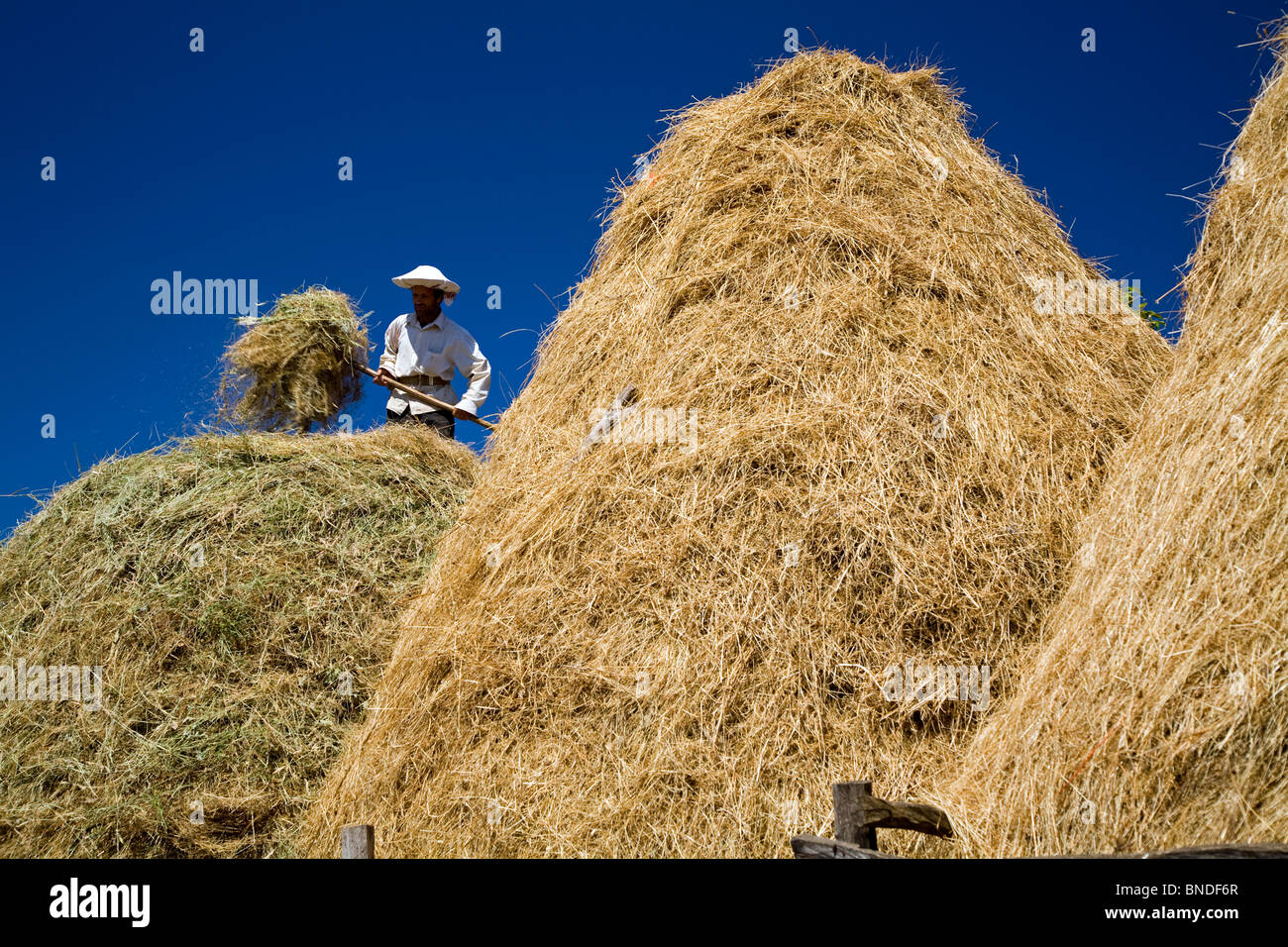Straws being piled in the country side of Kirklareli Turkey - Stock Image