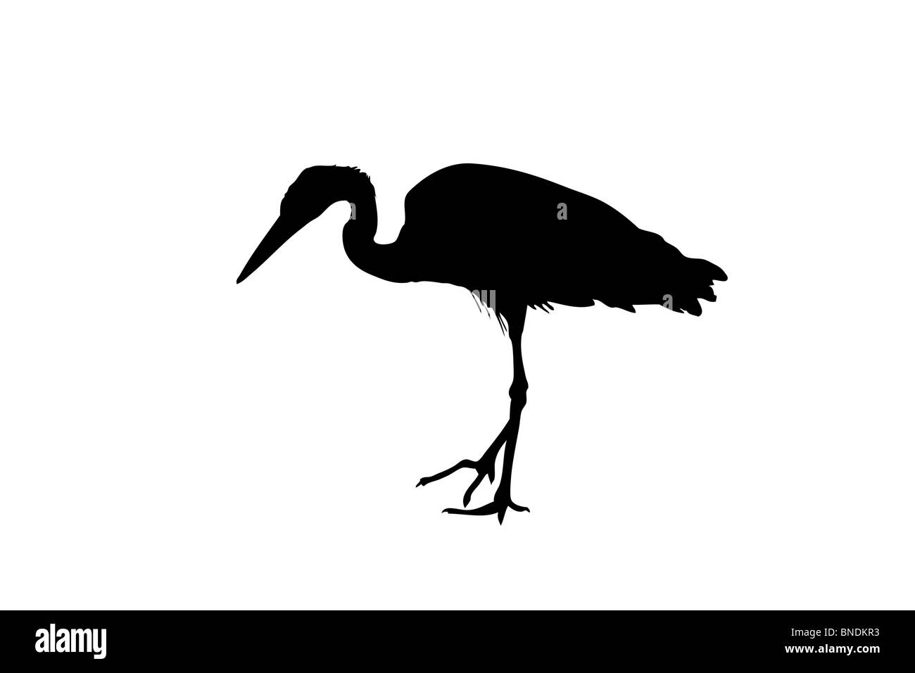 A silhouette of a heron - Stock Image