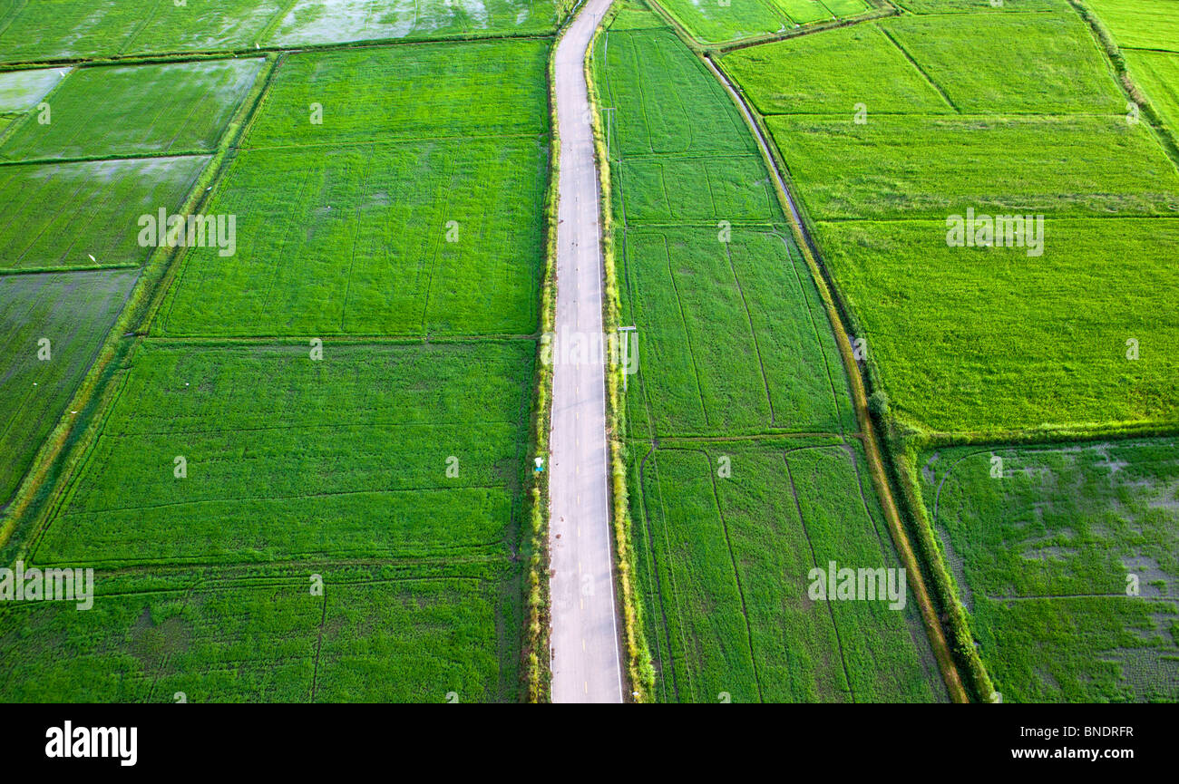 Aerial view of Rice field or Rice terrace, Ratchaburi, Thailand. - Stock Image