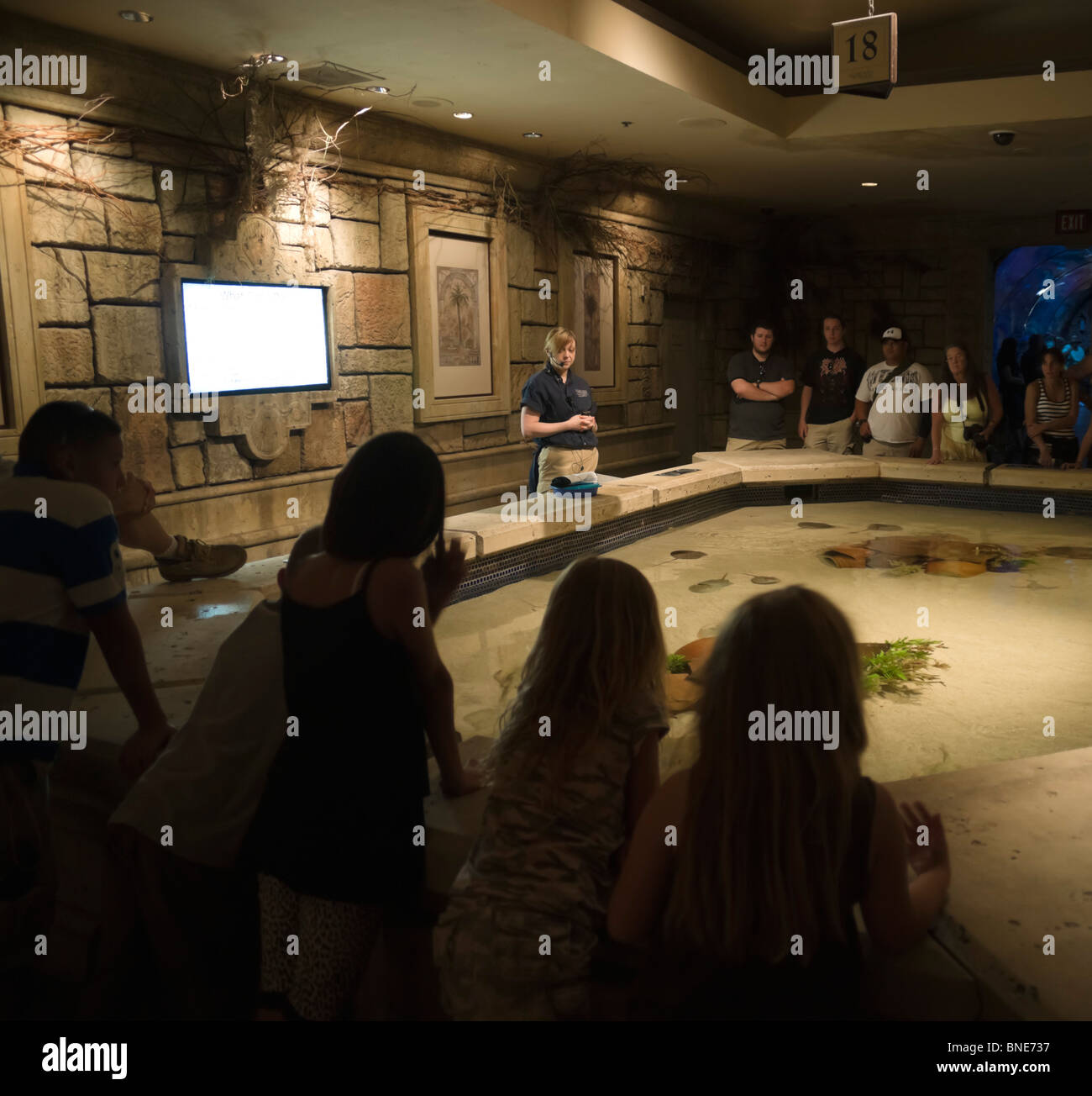 Mandalay Bay resort hotel Las Vegas - Shark Reef aquarium visitor attraction, rays and flatfish with visitors - Stock Image