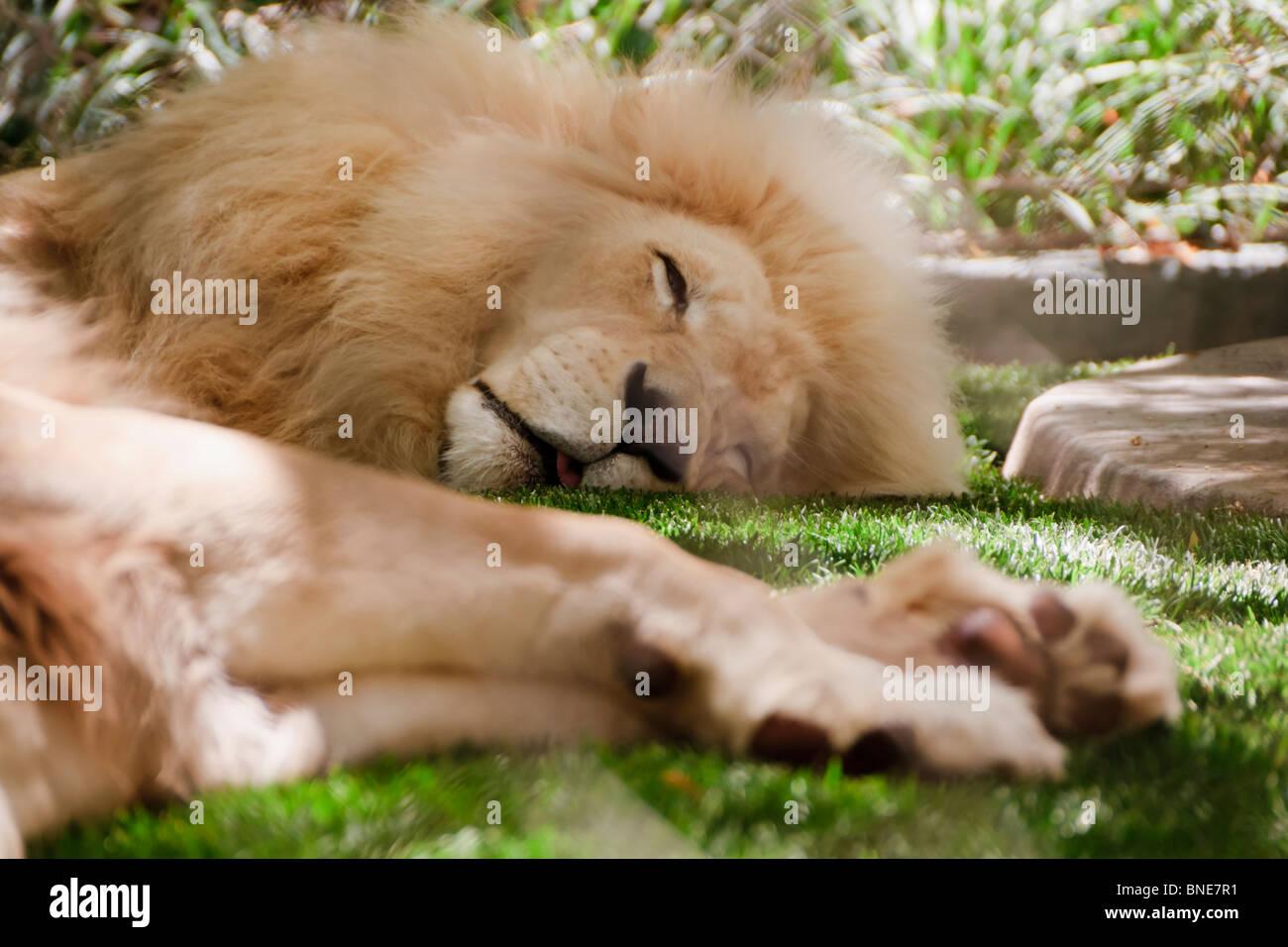 Zoo Vegas Stock Photos & Zoo Vegas Stock Images - Alamy