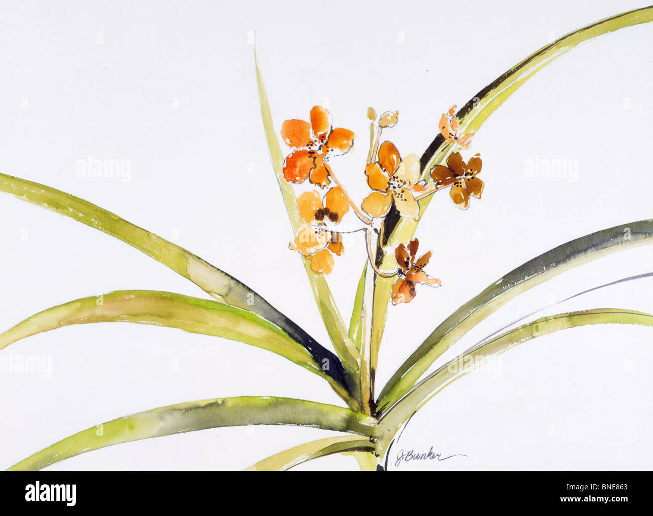 Golden Orchid I by John Bunker, watercolor, 1990 Stock Photo