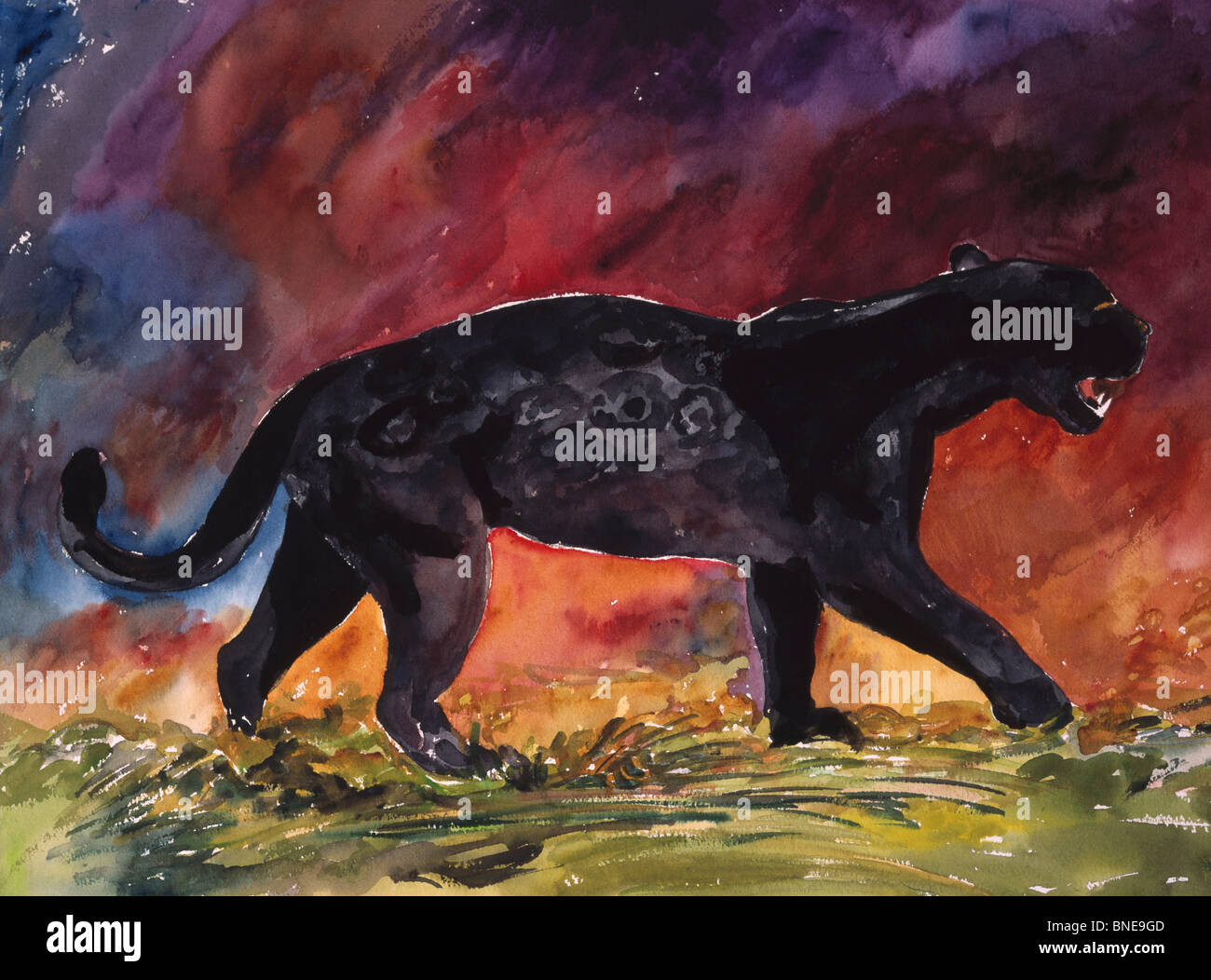 Black Jaguar Walking By John Bunker Watercolour Painting 2000 Stock Photo Alamy