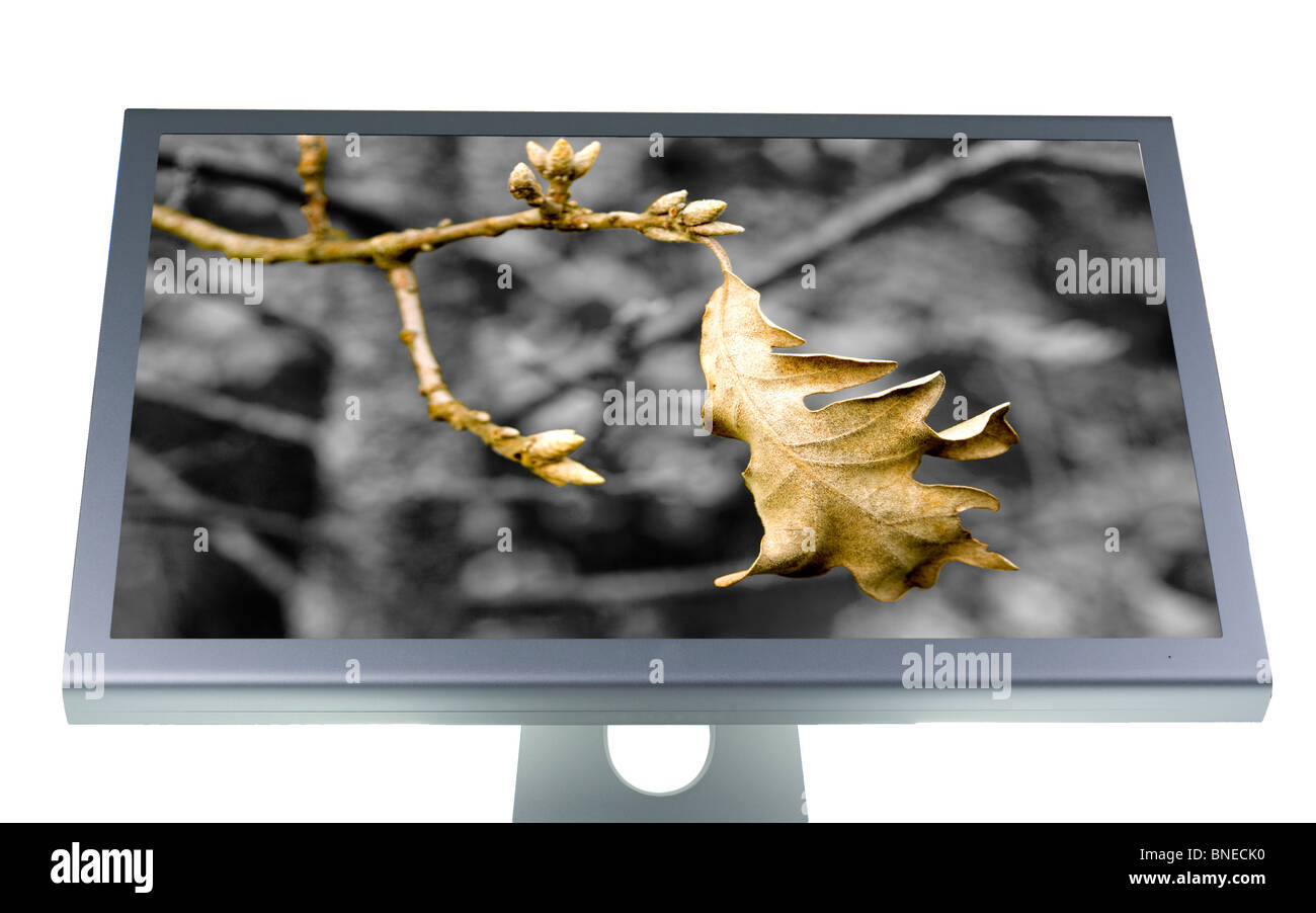 computer lcd or tft monitor with flat screen - Stock Image