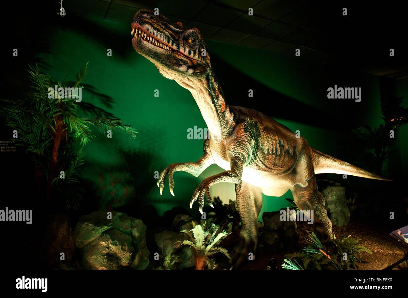 Sculpture of Velociraptor at Witte museum housing Dinosaur exhibition in Texas San Antonio, USA Stock Photo