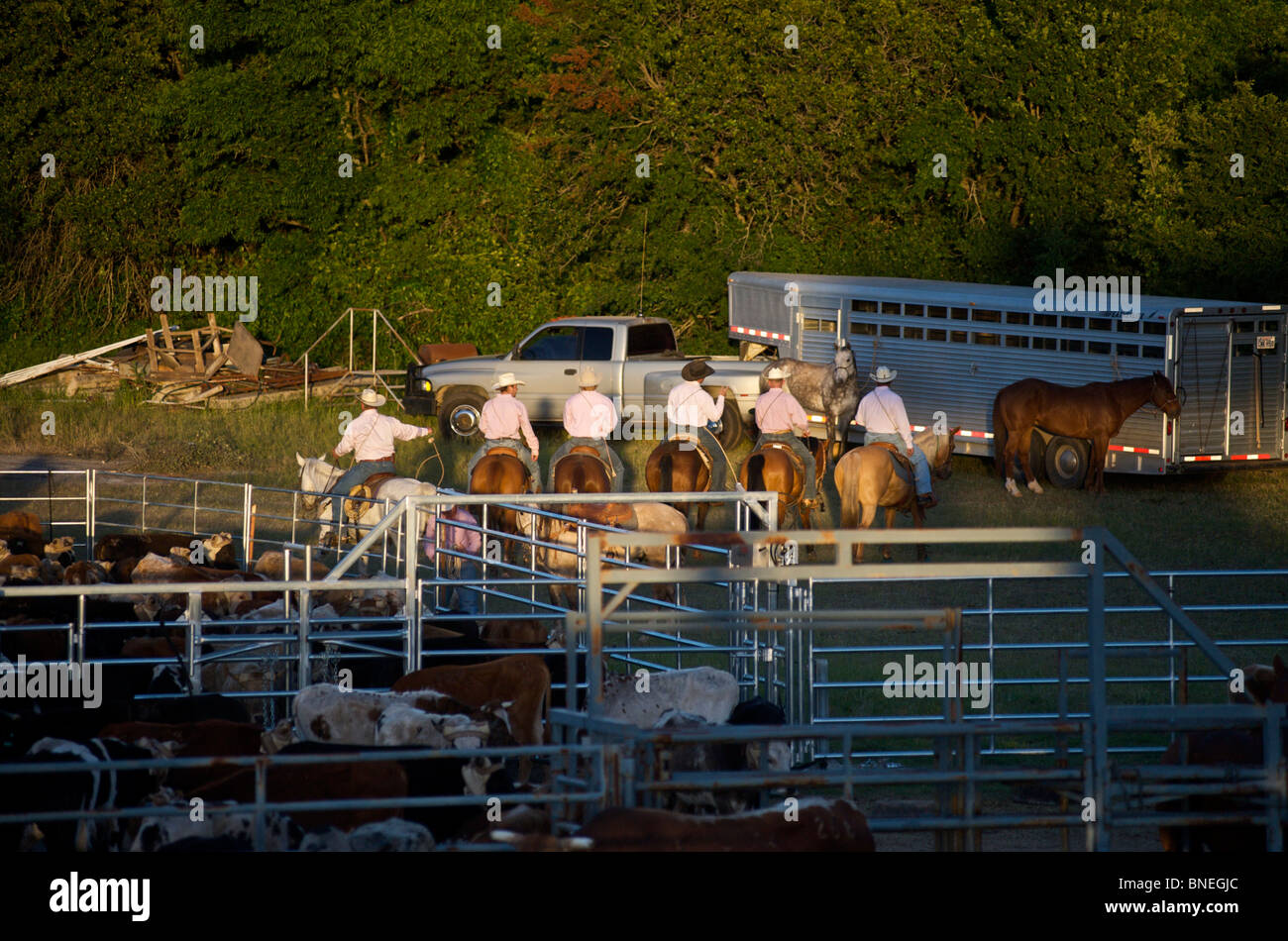 Cowboy members of PRCA gearing up backstage for rodeo event in Bridgeport, Texas, USA - Stock Image