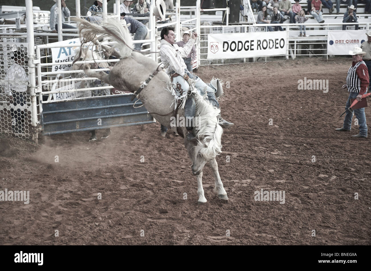 Rodeo cowboy member of PRCA trying to balance himself on horse in Smalltown Bridgeport, Texas, USA Stock Photo