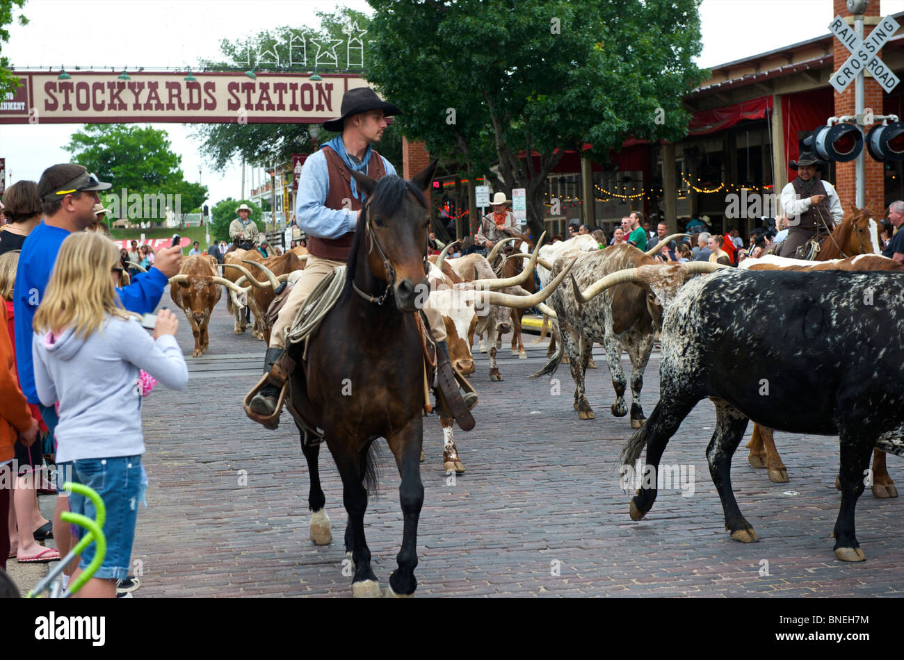 Longhorns and cowboys walking on the street at Stockyards station in Fort Worth, Texas, USA Stock Photo