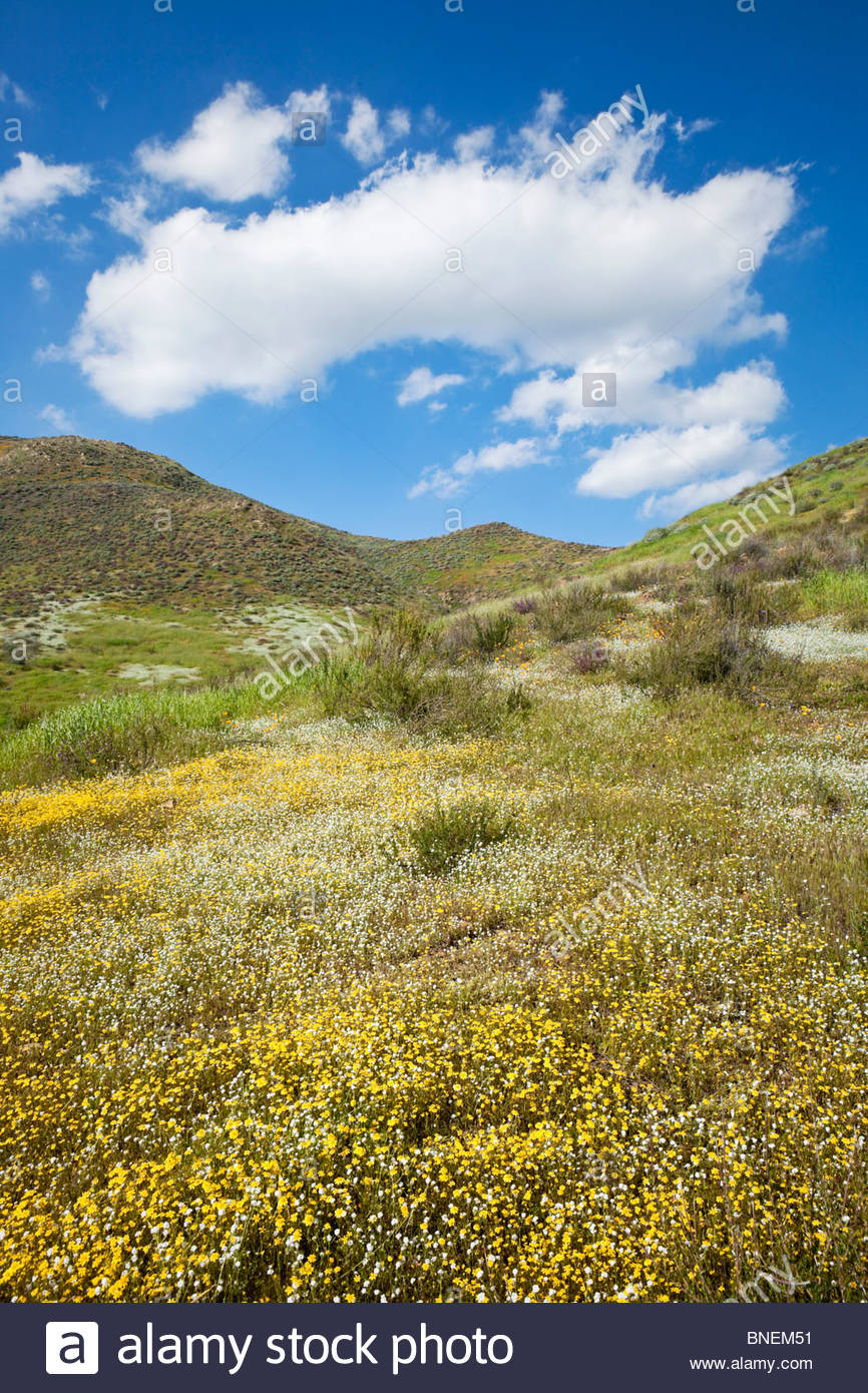 Spring Wildflowers in the Hills of Lake Elsinore, California Stock Photo