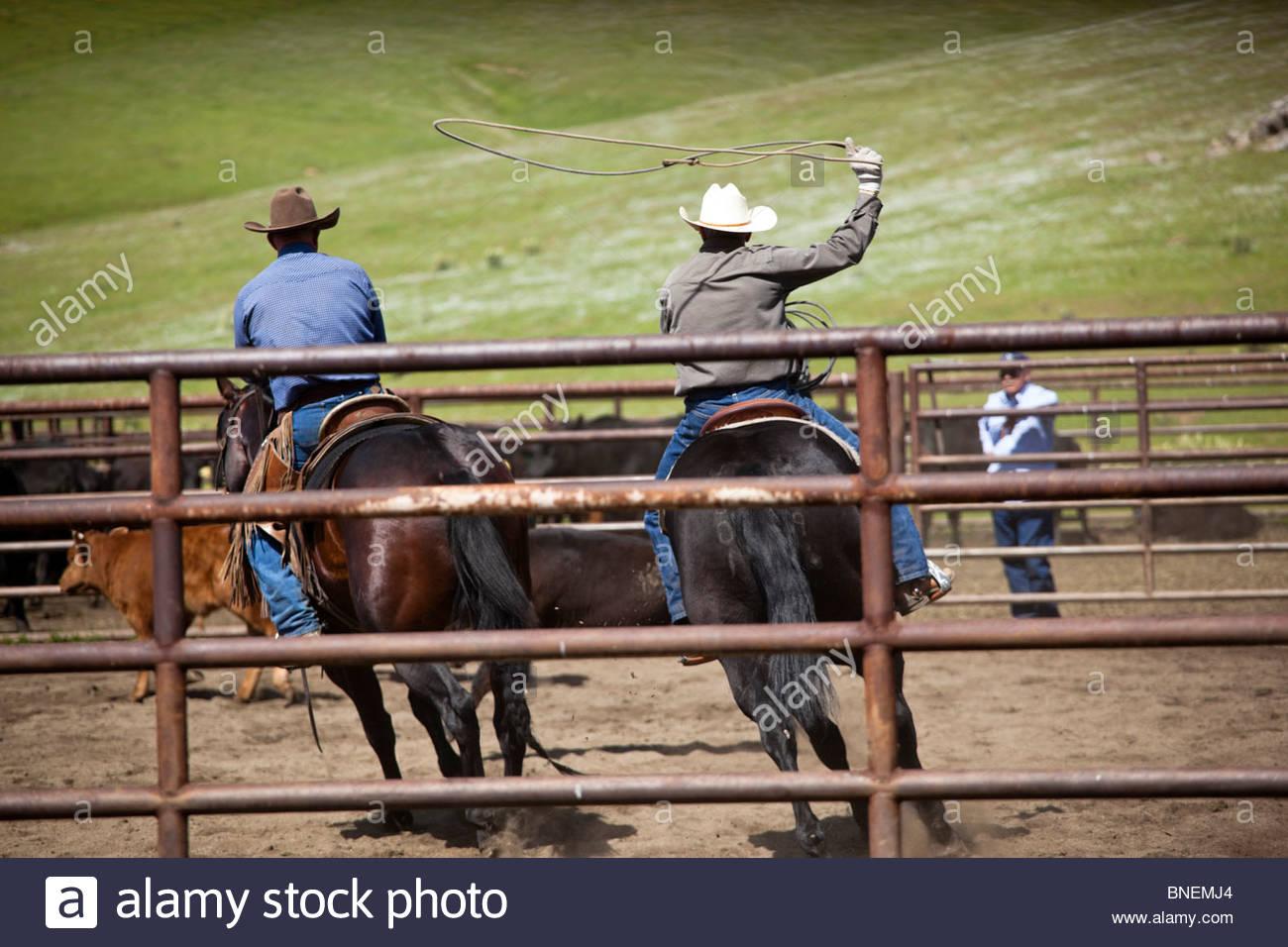 Cowboys Stock Photos Amp Cowboys Stock Images Alamy