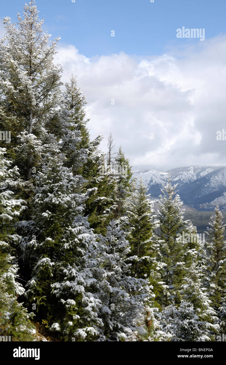 Snow covered pine and fir forest, Sawtooth Mountains, Rocky Mountains, Idaho, USA - Stock Image
