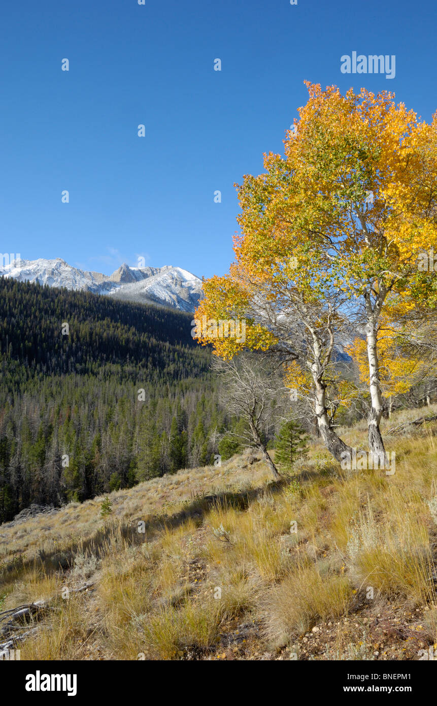 Autumn / Fall colour in the Sawtooth Mountains, Sawtooth Wilderness / National Recreation Area, Rocky Mountains, - Stock Image