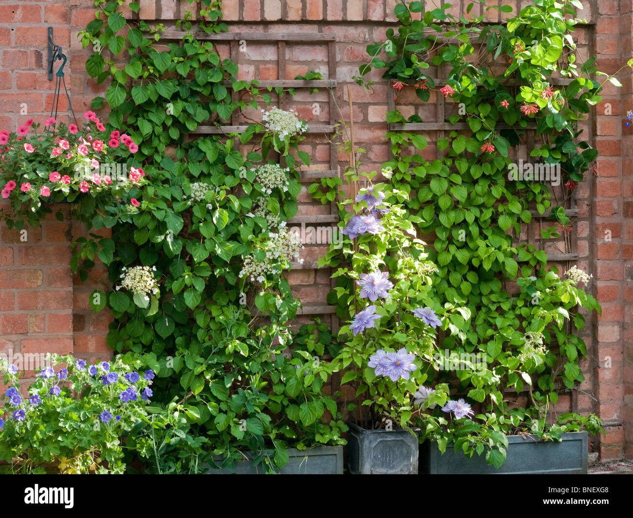 hanging basket brick wall life green plant metal chain. suspended ...
